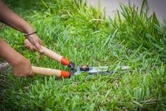 Tijeras de la hierba Imagen de archivo libre de regalías