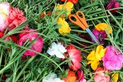 Tijeras para la cosecha de la flor imagen de archivo