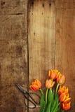 Tijeras y tulipanes antiguos Foto de archivo libre de regalías