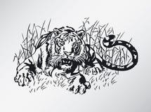 Tijger Stock Illustratie