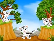 Tijger drie met de scène van de bergklip royalty-vrije illustratie