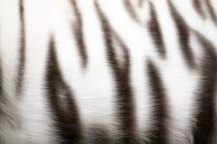 Tijger-huid Stock Fotografie