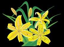 Tijger lilly royalty-vrije illustratie