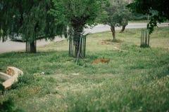 Tijger onder een boom in Fasano-apulia Italië Royalty-vrije Stock Afbeeldingen