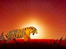 Tijger op zonsondergangInternet achtergrond Stock Foto's
