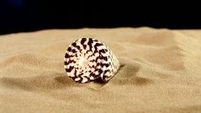 Tijger overzeese shell met zand op zwart, achterlicht stock footage