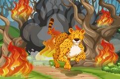Tijger vanaf wildfire in werking die wordt gesteld die vector illustratie