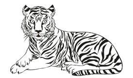 Tijger vectorillustratie Stock Afbeelding