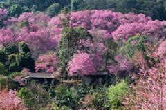 Tijgerbloemen stock afbeelding