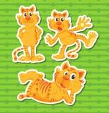 tijgers Stock Afbeeldingen