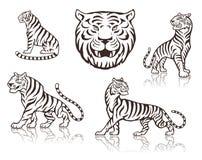 tijgers Royalty-vrije Stock Afbeeldingen
