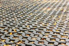 Tijolo e folhas Fotografia de Stock