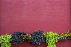 Tijolo pintado vermelho com as plantas plantadas que quadro a parte inferior do espaço vazio do projeto foto de stock