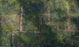 Tijolos com musgo verde Fotografia de Stock
