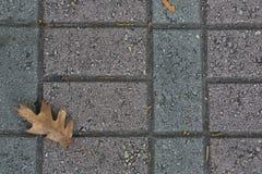 Tijolos escuros do Paver com folha do carvalho fotos de stock