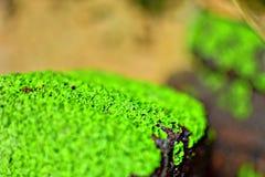 Tijolos verdes com efeito do borrão em india Imagem de Stock Royalty Free