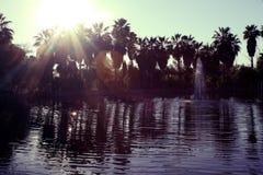Tijuana Botanic Garden foto de stock royalty free