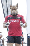 Tijuana mascot Royalty Free Stock Photography