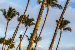 Tików drzewka palmowe I pochodnia zdjęcie royalty free