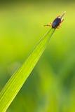 Tik op gras stock fotografie