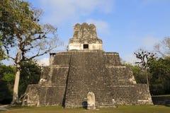 tikal危地马拉捷豹汽车玛雅的寺庙 免版税库存照片