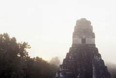 tikal危地马拉玛雅的废墟 免版税图库摄影