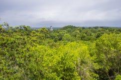 Tikal国家公园 图库摄影