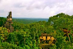 Tikal国家公园 库存图片