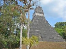 Tikal国家公园 免版税库存图片