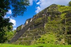 tikal的危地马拉 免版税图库摄影