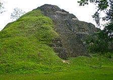 Tikal金字塔在危地马拉 库存照片