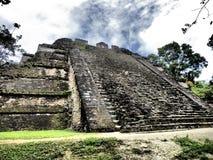 Tikal foto de stock royalty free