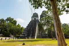 Tikal fotografia de stock royalty free