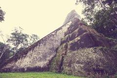 Tikal imagem de stock royalty free