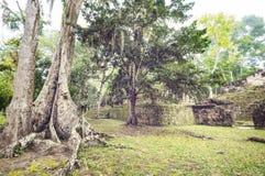 Tikal foto de stock