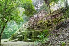Tikal fotografia de stock