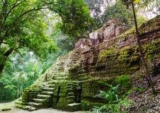 Tikal imagens de stock