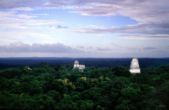 Tikal Stock Afbeelding