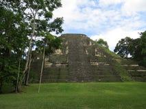 Tikal Imágenes de archivo libres de regalías