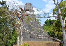 Tikal Zdjęcie Royalty Free