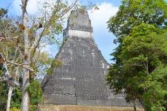 Tikal Στοκ φωτογραφίες με δικαίωμα ελεύθερης χρήσης