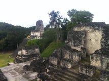 Tikal, Archelogical-Plaats van Maya, Noordelijk Guatemala Stock Foto