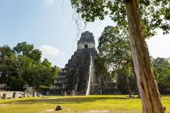 Tikal. Famous ancient Mayan temples in Tikal National Park, Guatemala, Central America Royalty Free Stock Photography