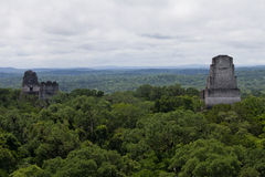 Tikal Guatemala. The pyramids of Tikal, Guatemala sticking out of the jungle Stock Image