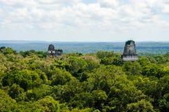 Tikal Guatemala Royalty Free Stock Image