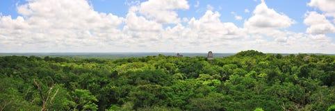 tikal guatemala rainforest Royaltyfria Bilder