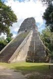 Tikal Guatemala: Tempel V, en av de viktiga pyramiderna (57 meter Arkivfoton