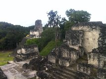 Tikal, local do Maya, Guatemala do norte de Archelogical Foto de Stock