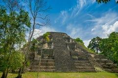 Tikal mayan ruins in guatemala Royalty Free Stock Image