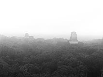 Tikal in the Mist stock photos